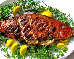 Gata Fish